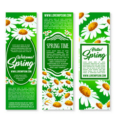 hello spring floral banner set with daisy flowers vector image vector image