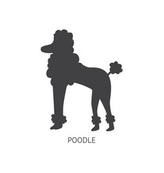black poodle dog silhouette isolated on white vector image