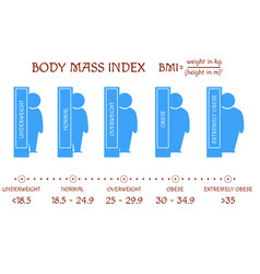 bmi concept body shapes from underweight vector image