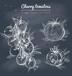 Sketchy set of cherry tomatoes on blackboard vector