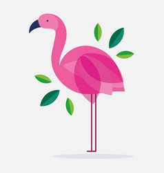 Flamingo bird feather foliage nature fauna flora vector