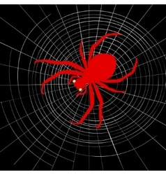 Spider on cobweb vector