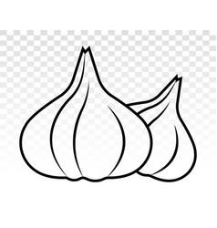 Two garlic allium sativum display line art icon vector