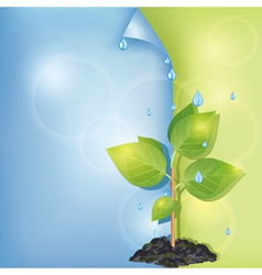 Eco background with plant and water drops vector image vector image