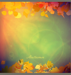 Autumn colorful red and yellow leaves vector