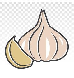 Fresh garlic bulbs allium sativum flat colours vector