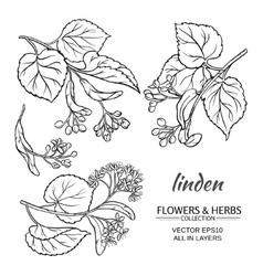linden set vector image vector image