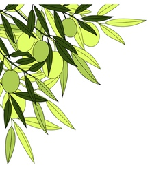 olives background vector image vector image