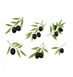 green olives vector image