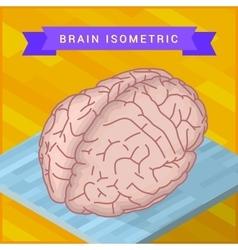 human brain flat isometric icon vector image