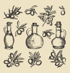 olive branch tree and oil and bottle hand drawn vector image