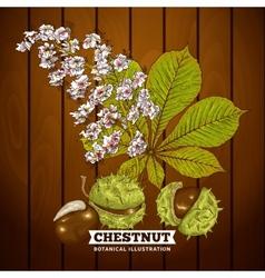 Chestnut Autumn Botanical vector