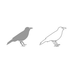 Crow grey set icon vector