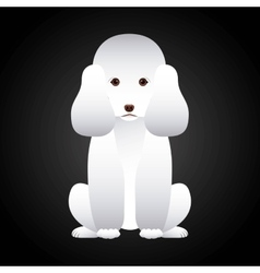 French poodle design vector