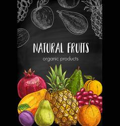 fruits sketch chalkboard sketch banner vector image