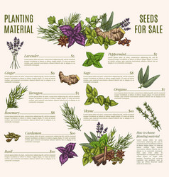 Herb and spice poster template for organic shop vector