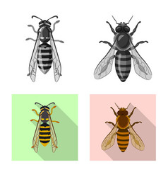 insect and fly icon vector image