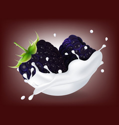 juicy sweet blackberry in milk splash vector image