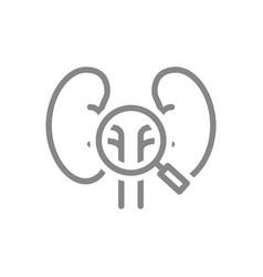 kidneys with magnifying glass line icon organ vector image
