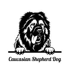 Peeking dog - caucasian shepherd dog breed - head vector