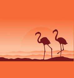 silhouette of two flamingo landscape vector image