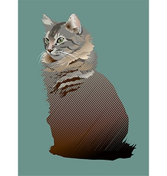 Young Maine Coon cat vector image vector image