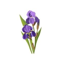 Iris Hand Drawn Realistic vector image vector image