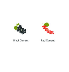 Currant isolated on white background in a vector