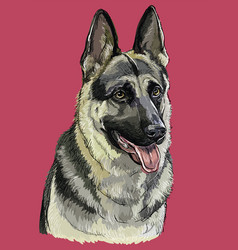 German shepherd colorful hand drawing portrait vector