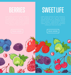 healthy and sweet food flyers with berries vector image