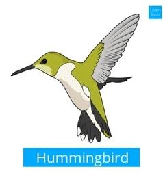 Hummingbird learn birds educational game vector image