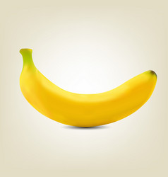 Photorealistic yellow banana vector