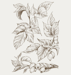 Set of hip rose buds berry and branches vintage vector