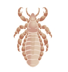 Louse vector image vector image