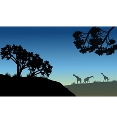 Silhouette of tree and giraffe vector