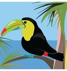 Beautiful toucan bird sitting on a palm tree vector image vector image