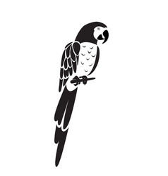 parrot icon vector image