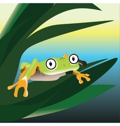 Frog sitting on a leaf in the swamp vector image