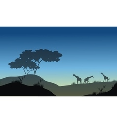 Silhouette of hills and giraffe vector image vector image