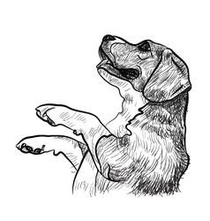 Beaglebegging for food vector