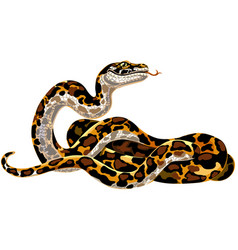 cartoon python vector image