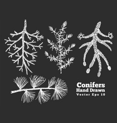 conifers hand drawn branches set vintage style vector image