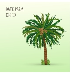 Date palm with fruits vector image