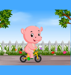 funny hippo cycling in the road vector image
