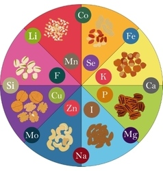 nuts and micronutrients vector image
