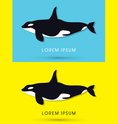 killer whale swimming vector image vector image
