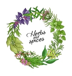 Circle template with type spices and herbs vector