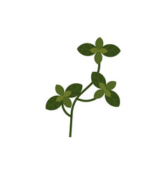 flat basil herb branch with leaves vector image
