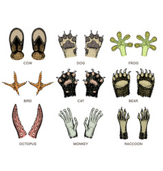 paws of animals or footprints and wildlife bird vector image
