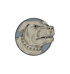 Rottweiler guard dog head angry drawing vector